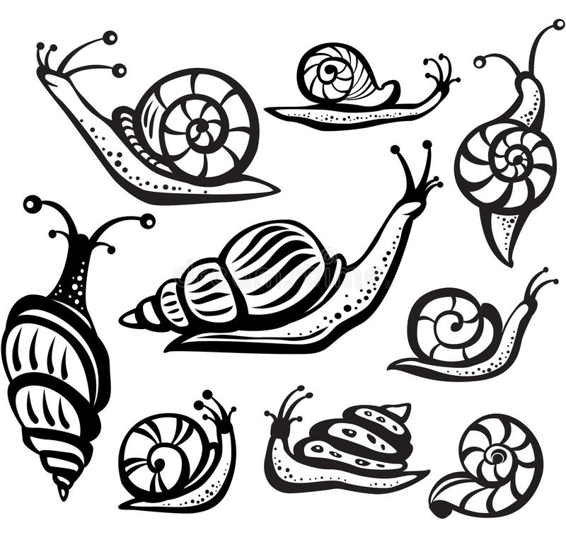 Комплект черно-белых улиток иллюстрация штока