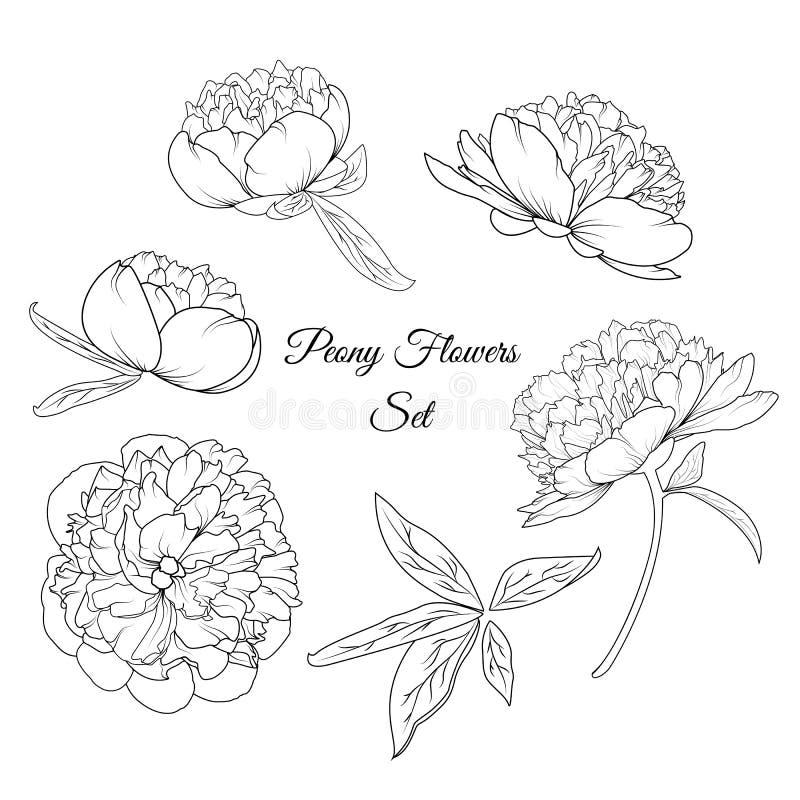 Комплект шаблона элементов розовых цветков пиона многоразовый иллюстрация вектора