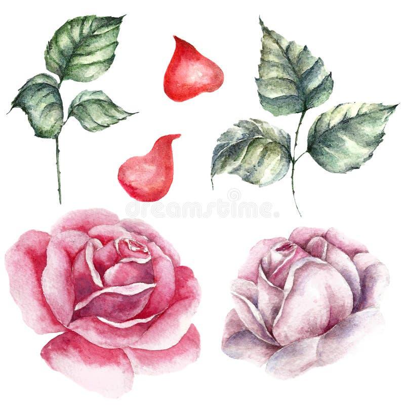 Комплект элемента роз Карточка свадьбы акварели бесплатная иллюстрация