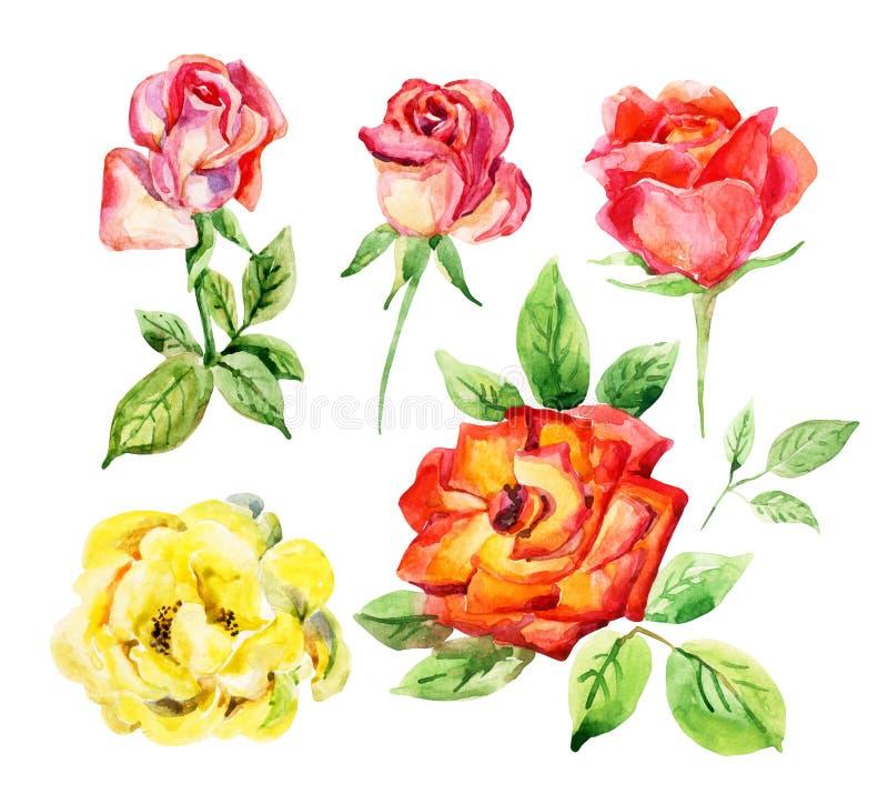 Комплект элементов роз акварели иллюстрация вектора