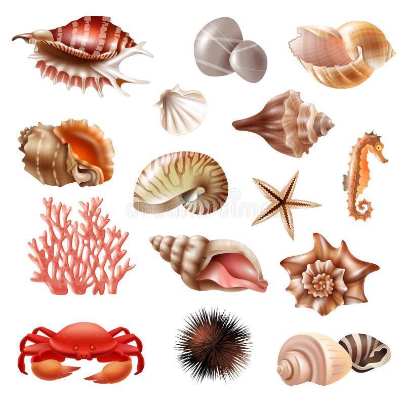 Комплект Seashell реалистический иллюстрация вектора