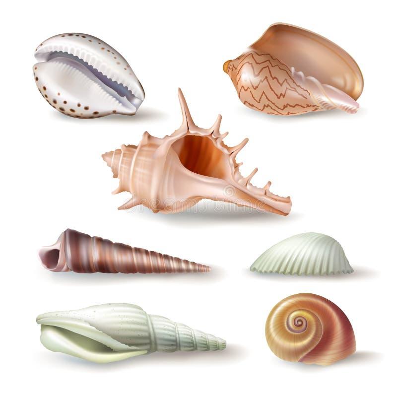 Комплект seashells иллюстраций вектора различных видов в реалистическом стиле иллюстрация штока