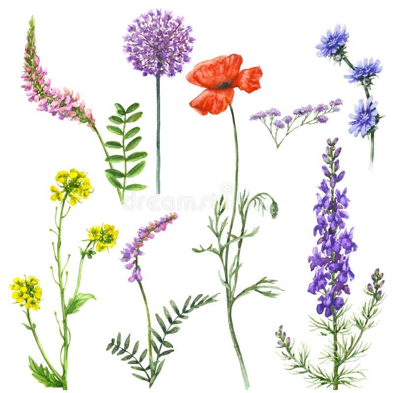Комплект Wildflowers иллюстрация вектора