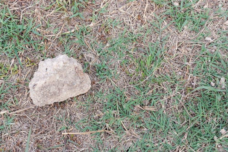 Ком на траве стоковая фотография