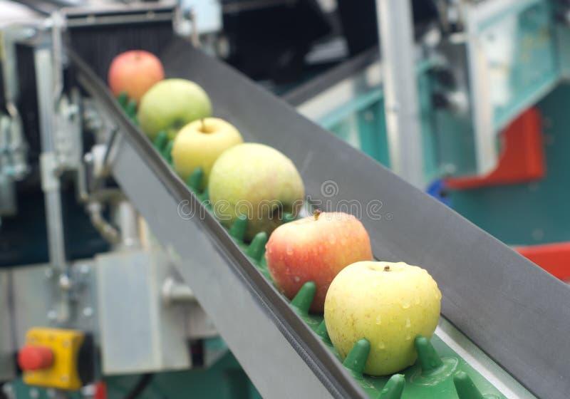 Конвейерная лента Яблока стоковые фото