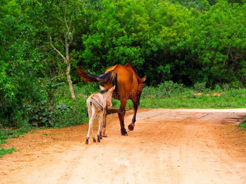 Конематка и свое passeando filhote стоковые изображения
