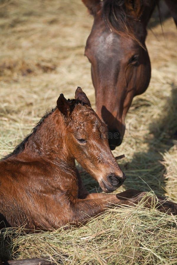 конематка осленка newborn стоковое фото rf