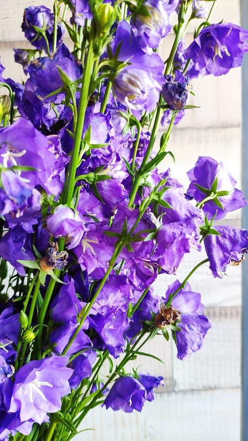 Конец-вверх букета голубых больших цветков bluebell, концепции цветков весны, выборочного фокуса стоковое фото