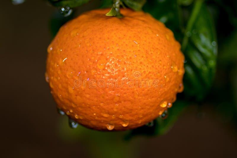 Конец-вверх влажного апельсина и своих лист стоковое изображение