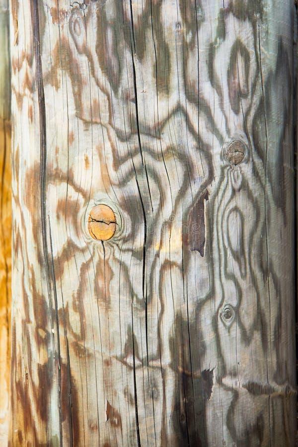 Конец вверх выдержанного журнала дерева отрезка, деревенской древесины, текстуры, предпосылки, внешнего пня дерева в спортивной п стоковые фотографии rf