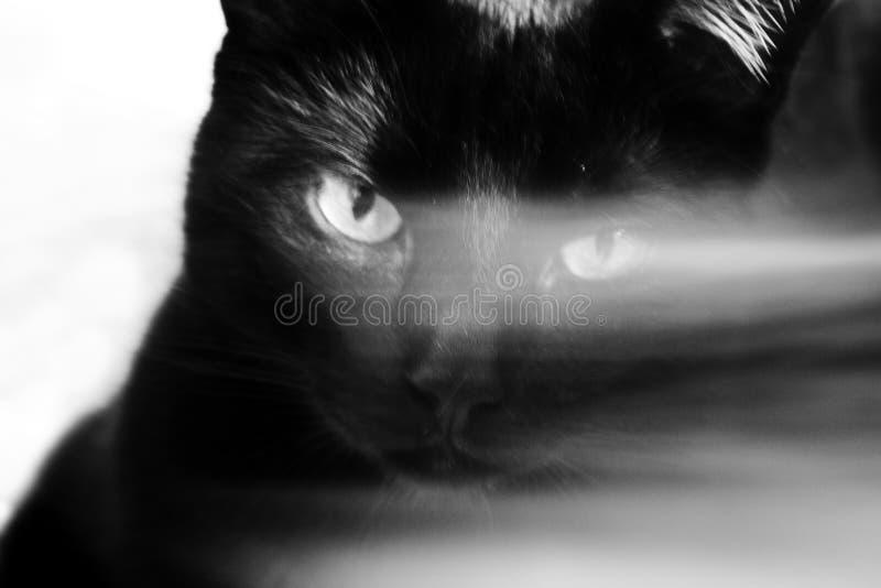 Конец-вверх головы черного кота с зелеными глазами над которыми белая черта Страшная эзотерическая концепция стоковые фото
