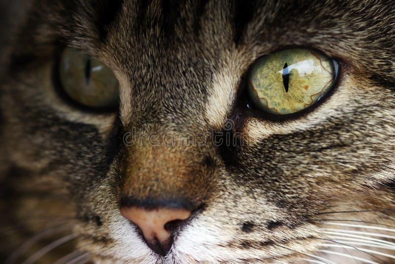 Конец-вверх глаза кота стоковое фото