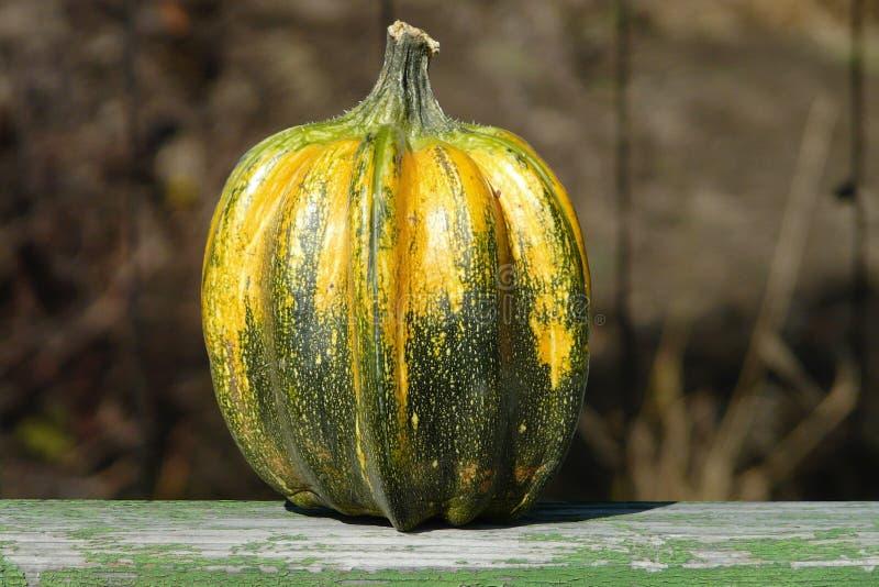 Конец-вверх желт-зеленой тыквы на запачканной коричневой предпосылке стоковые фото