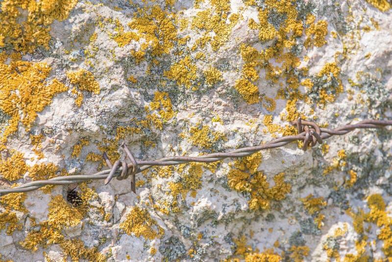 Конец-вверх желтого мха на белой каменной стене стоковые изображения rf
