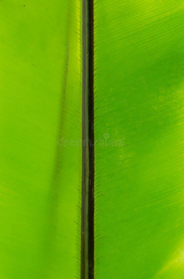 Конец-вверх линии и текстуры зеленых лист - предпосылки стоковое фото rf
