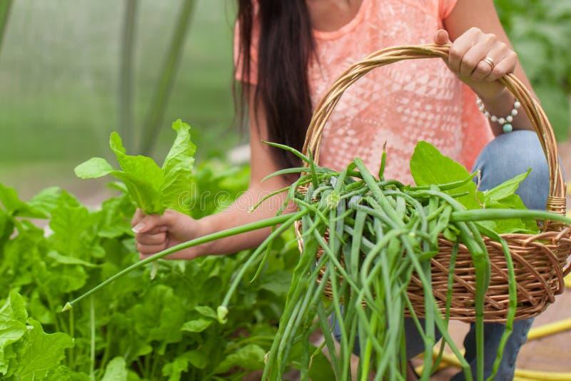 Download Конец-вверх корзины зеленеет в руках женщины Стоковое Изображение - изображение насчитывающей лук, салат: 40587267