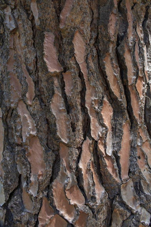 Конец-вверх коры дерева стоковые изображения rf