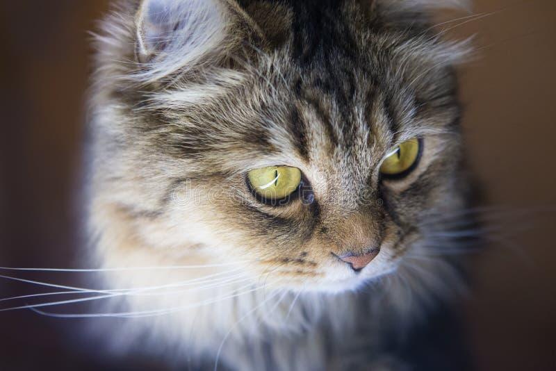 Конец-вверх кота головной стоковое фото rf