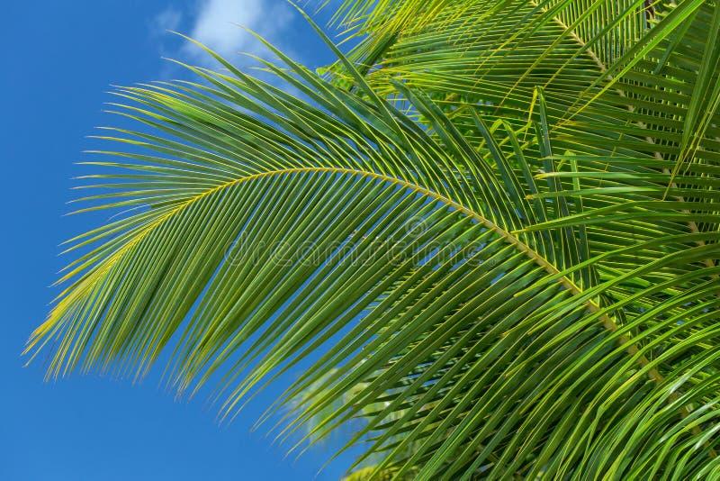 Конец-вверх лист пальмы стоковые изображения