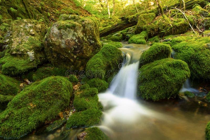 Конец вверх малого потока леса около третьего свода понижается стоковое изображение