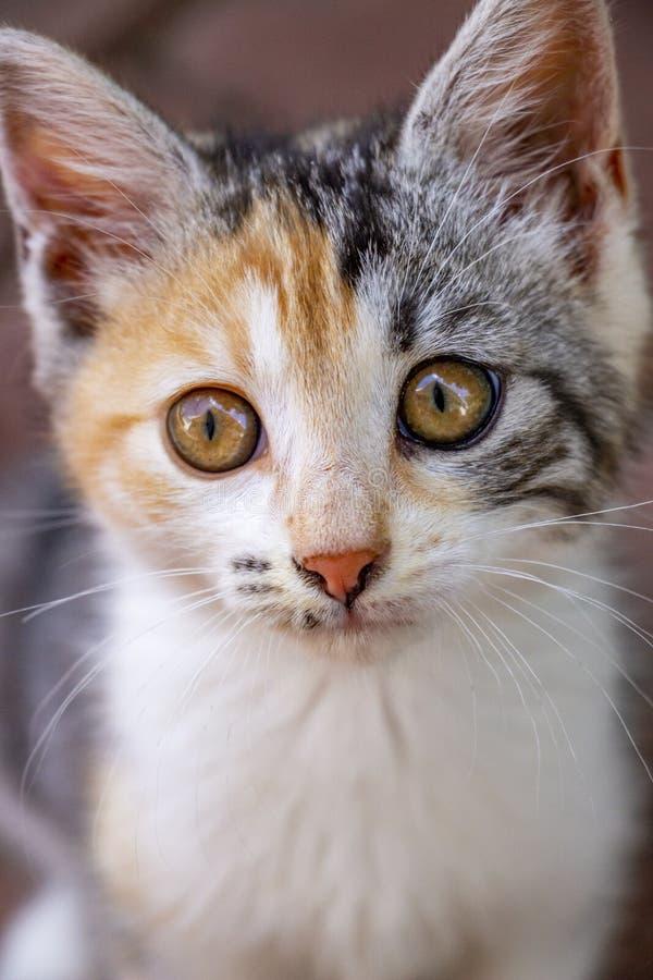 Конец-вверх милого котенка ситца стоковые изображения