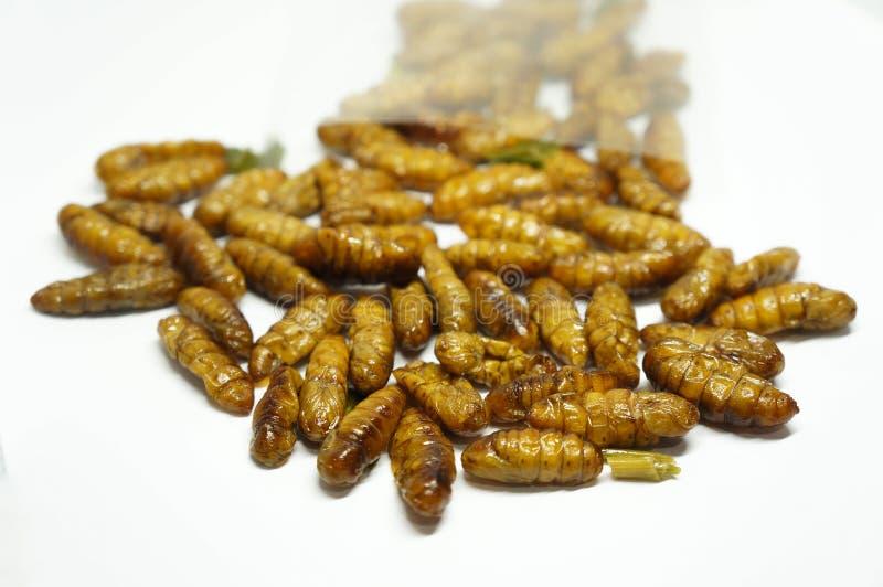 Конец-вверх на шелкопрядах edibles стоковое фото rf