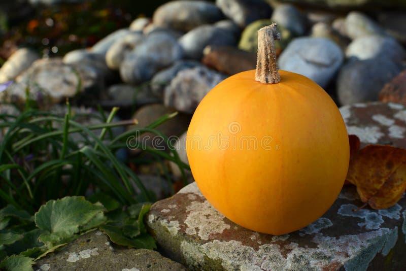 Конец-вверх оранжевой тыквы на стене сада стоковые фотографии rf
