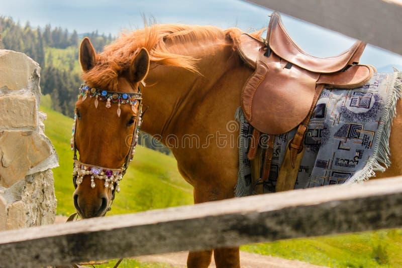 Конец-вверх лошади на верхней части горы стоковая фотография