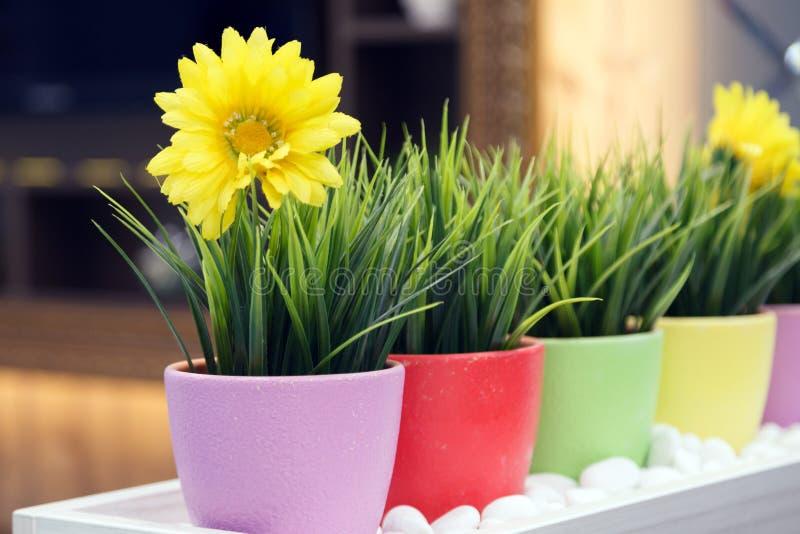 Конец-вверх пестротканых цветочных горшков с зеленой искусственной травой и желтыми маргаритками с gerberas в салоне цветка на стоковая фотография rf