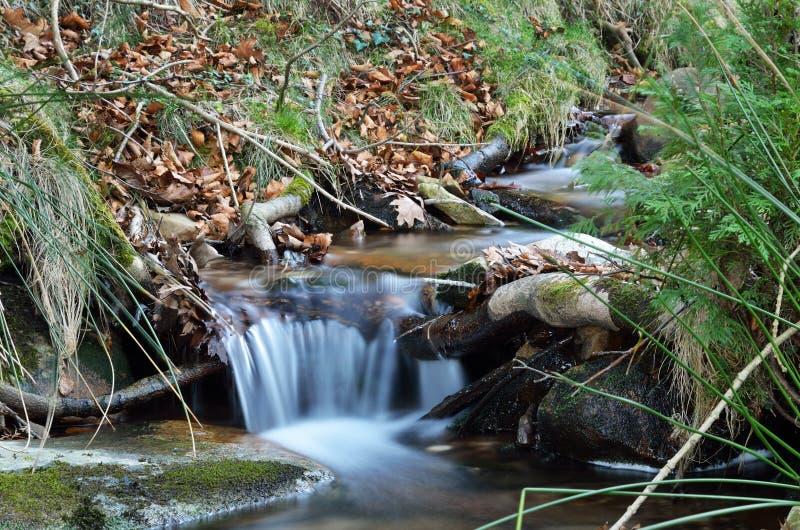 Конец-вверх потока в наклоне горы стоковые фотографии rf