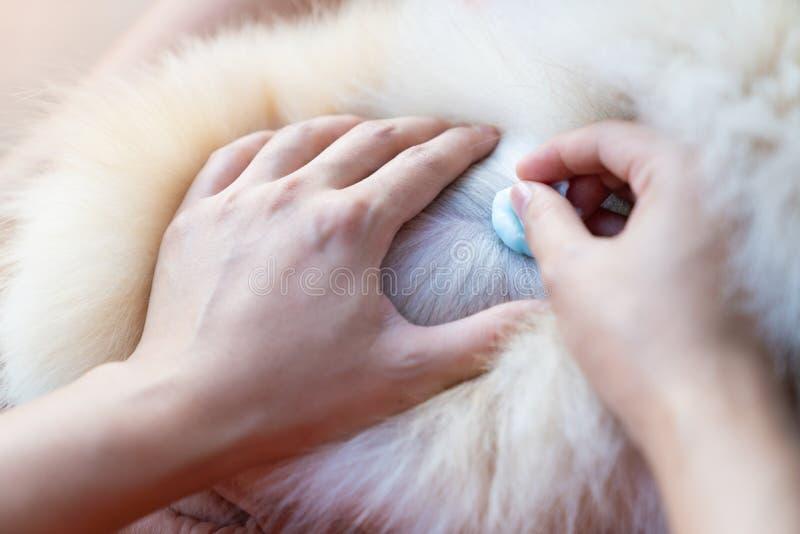 Конец вверх по доктору руки помочь больному собаки стоковое фото