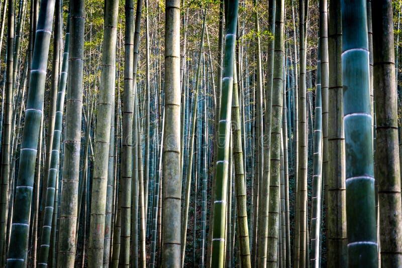 Конец вверх по запачканной предпосылке бамбукового сада леса стоковое фото rf