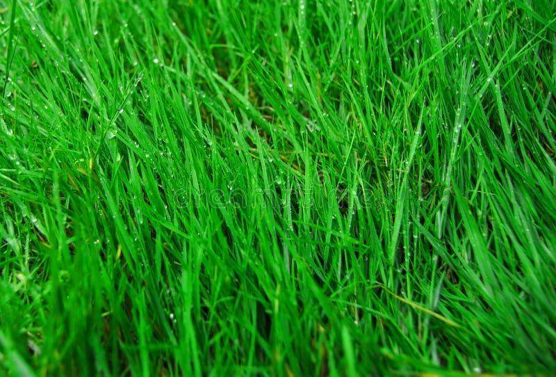 Конец вверх по зеленой траве стоковые фотографии rf