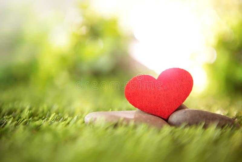 Конец вверх по красной форме сердца на зеленой свежей траве, хорошей ослабляет и любит романский символ чувства, предпосылку дня  стоковые изображения