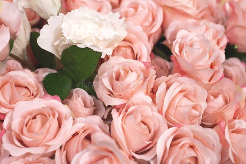 конец вверх по предпосылке текстуры с пинком и белыми розами стоковые фотографии rf