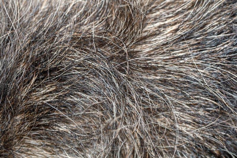 Конец вверх по серой коже собаки для картины и предпосылки стоковые фото