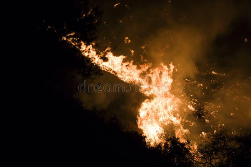 Конец вверх по ярким оранжевым пламенам и тлеющим углям на черной предпосылке во время огня Калифорния стоковое изображение