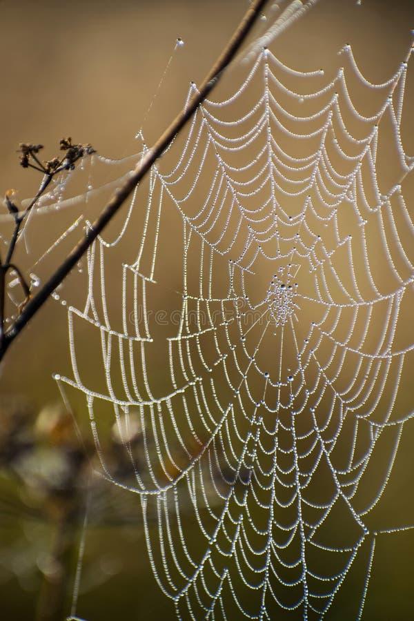 Конец-вверх сети паука Сеть ` s паука в поле осени в солнце излучает на зоре и яркая предпосылка падений росы стоковое фото rf