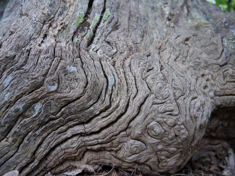 Конец вверх сморщенной расшивы старого дерева стоковая фотография rf