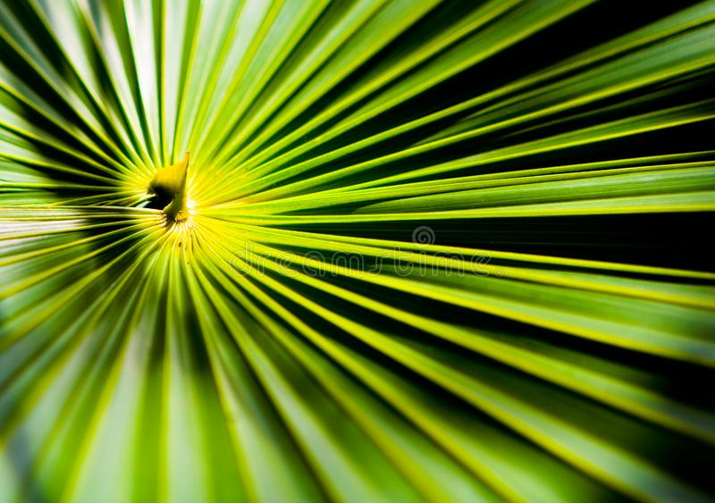 Конец-вверх снял центр пальмы стоковые изображения rf