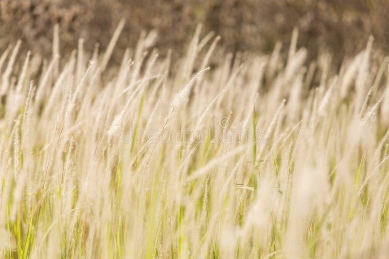 Конец-вверх трав стоковое изображение rf