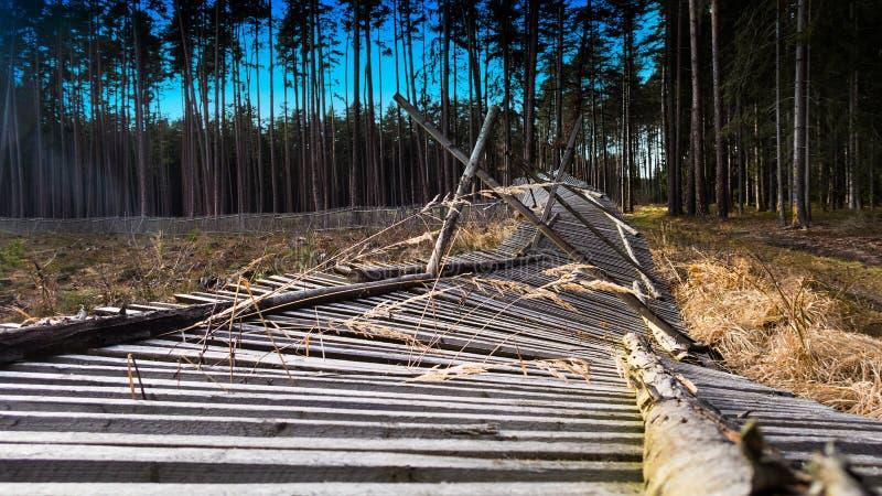Конец-вверх упаденной загородки reforested района в сельском лесе стоковое изображение rf