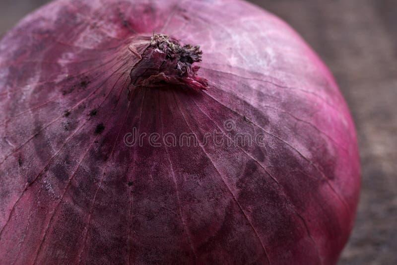 Конец-вверх фиолетового лука стоковое изображение rf