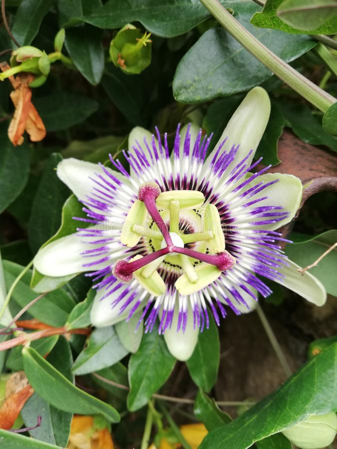 Конец-вверх цветка стоковое фото