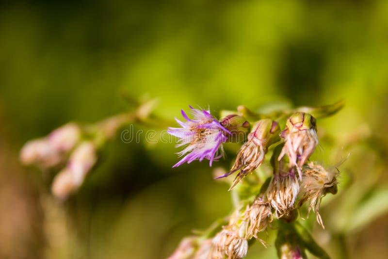 Конец-вверх цветка в поле стоковая фотография rf