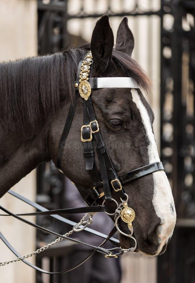 Конец-вверх Queen' лошадь предохранителя s королевская стоковая фотография rf