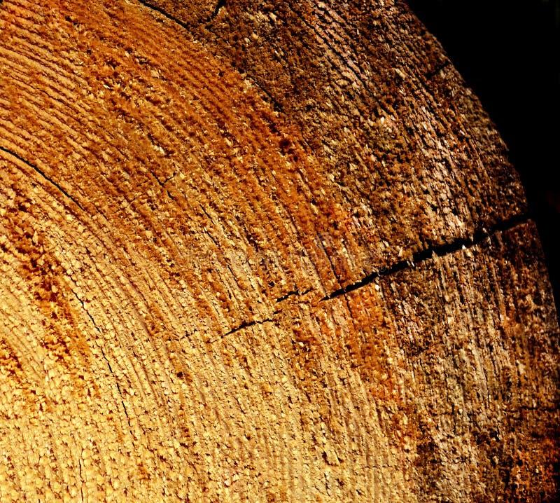Конец-вверх Serrated и свежего отрезка деревянный материальный стоковые изображения