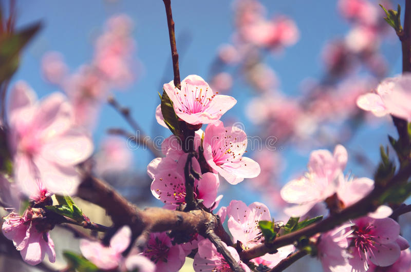 Конец ветви весны цветя вверх стоковая фотография rf