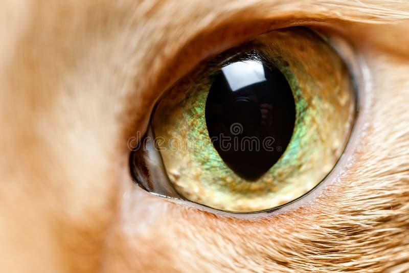 Конец глаза кота вверх стоковые фото