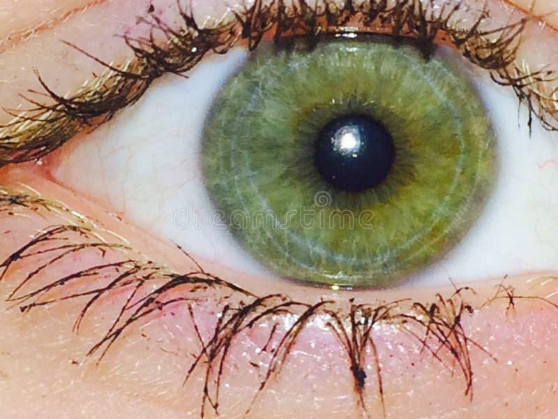 Конец зеленого глаза вверх стоковые изображения rf